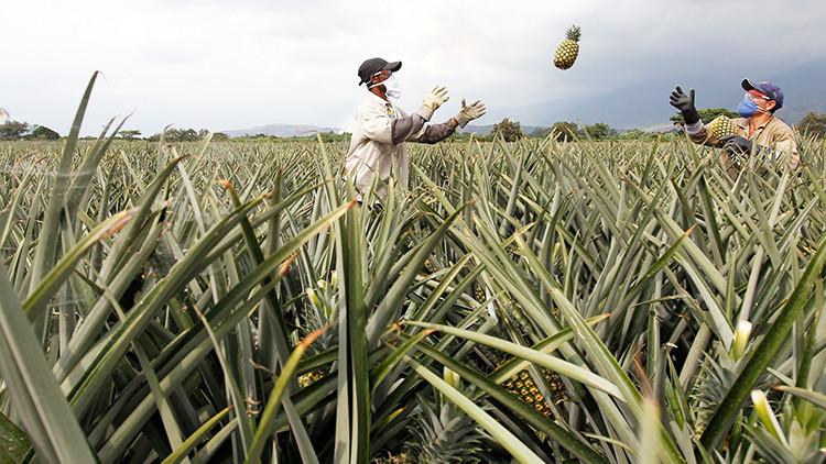 Informe: El 80 % de las tierras de Colombia están en manos del 1 % de los propietarios