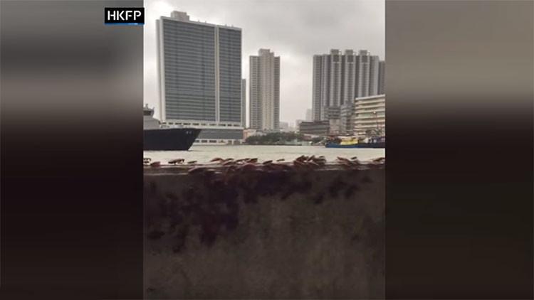 """""""¡Marchan a tu casa!"""": Graban en China la huida 'apocalíptica' de cucarachas durante el huracán Hato"""