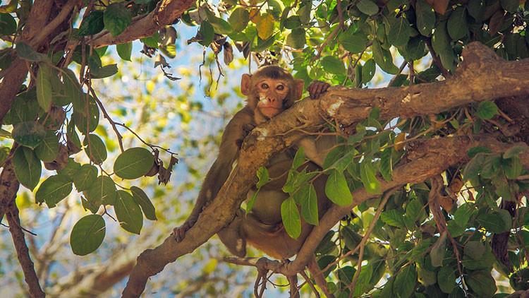 FOTO: Científicos fotografían un escurridizo animal de la Amazonia que no se veía desde 1936
