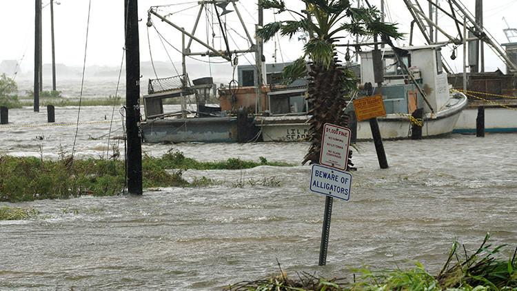 Más de 300 caimanes podrían escapar de una reserva en Texas debido a las inundaciones