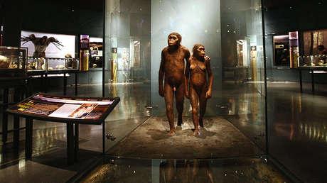Instalaciones de la Sala de Orígenes Humanos, de Anne y Bernard Spitzer, en el Museo estadounidense de Historia Natural.