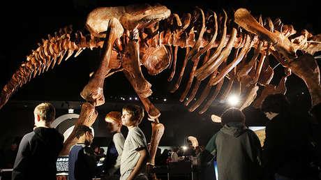 Réplica de un esqueleto de un Patagotitan mayorum en el Museo Americano de Historia Natural de Nueva York.