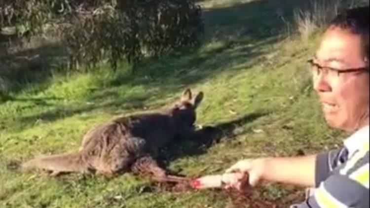 Presentan cargos en Australia contra el hombre que degolló a un canguro (ABERRANTE VIDEO)