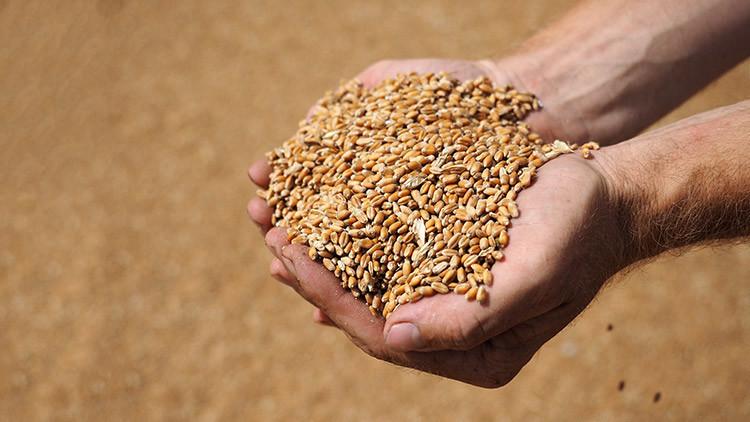 Llega a Venezuela el primer cargamento de trigo proveniente de Rusia