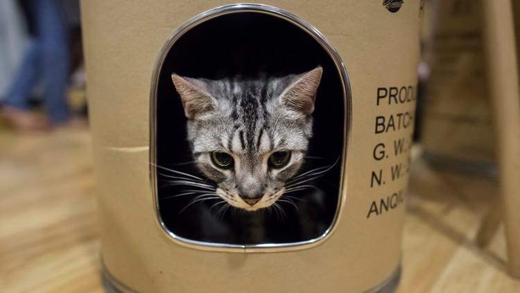"""""""¿Puede un gato ser sólido y líquido?"""": El Premio Ig Nobel de Harvard y sus ganadores más locos"""