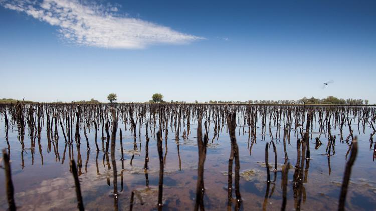 Argentina bajo el agua: una superficie equivalente a Corea del Sur está inundada