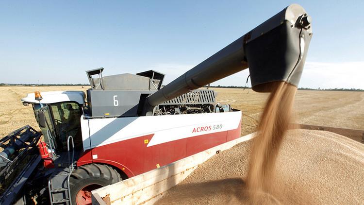 El trigo ruso conquista nuevos mercados internacionales, entre ellos América Latina