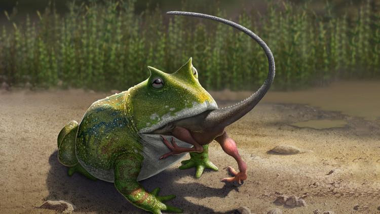 Científicos descubren una rana gigante 'diabólica' que devoraba dinosaurios