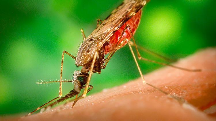 """""""Estamos perdiendo una carrera peligrosa"""": La 'súper malaria' se extiende rápidamente en Asia"""