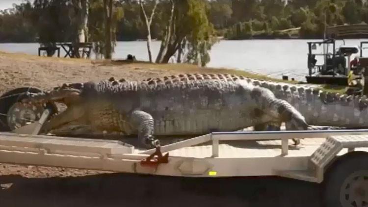 La muerte de un cocodrilo amenaza con desatar una guerra por el poder en Australia