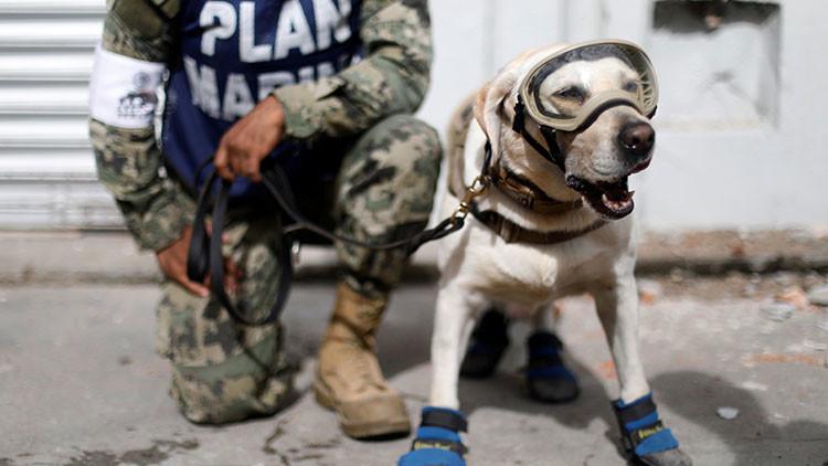 Un grupo animalista se convierte en objeto de críticas durante los rescates en México (Fotos)