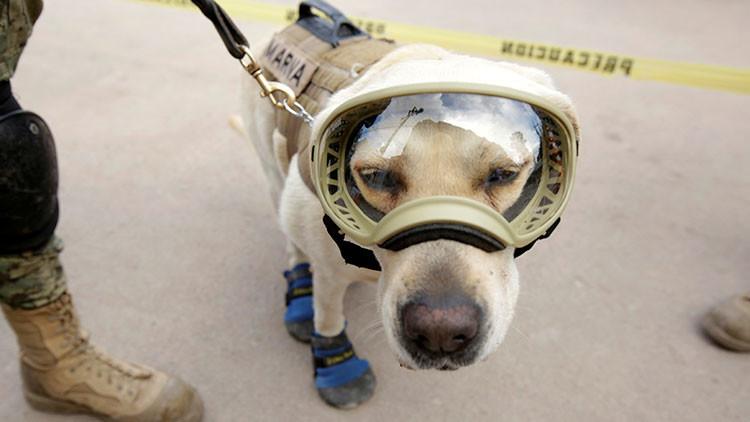 Japón recuerda a la perra Frida al homenajear la labor de sus brigadas de rescate en México
