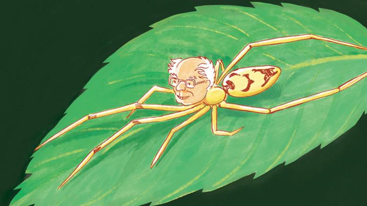 """Bautizan a nuevas especies de arañas """"sonrientes"""" con los nombres de Bernie Sanders y Obama (FOTOS)"""