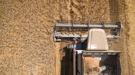 La consecha de trigo en la región de Krasnodar (Rusia)