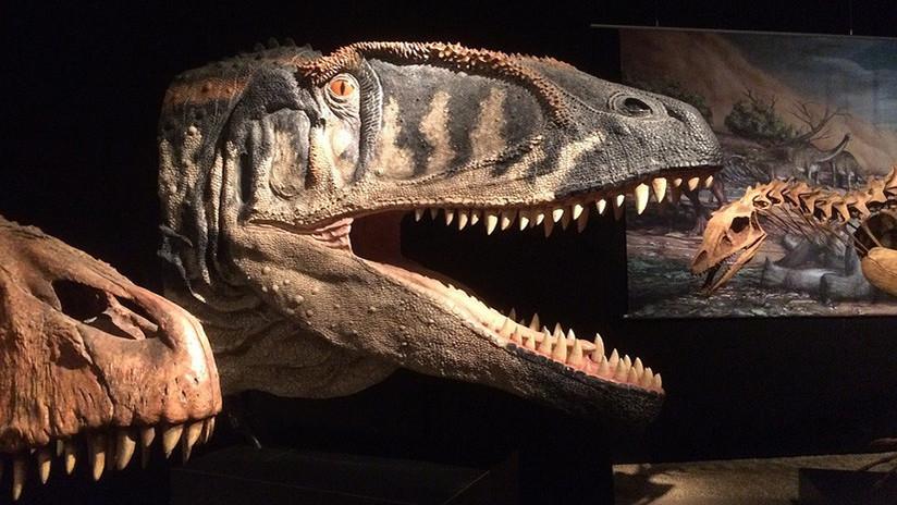 Tailandia: Encuentran el fósil de dinosaurio más grande del país (FOTO)