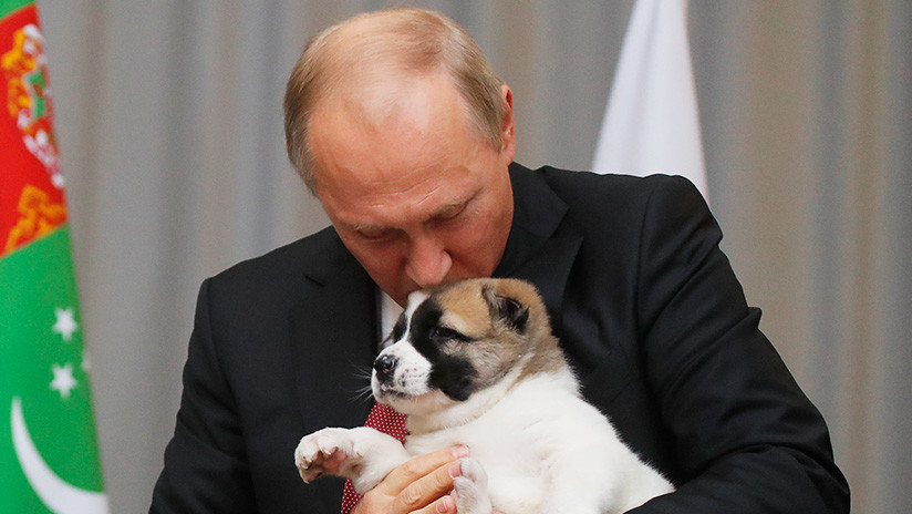 VIDEO: El cachorro de pastor de Asia Central que le regaló a Putin el presidente de Turkmenistán