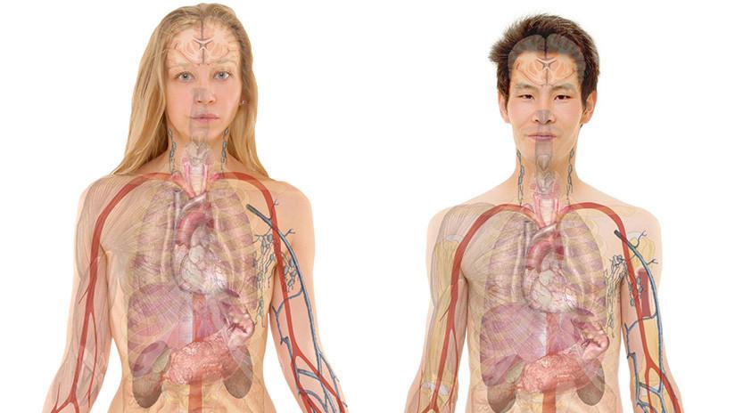 Estos son los siete órganos que no necesitas para sobrevivir