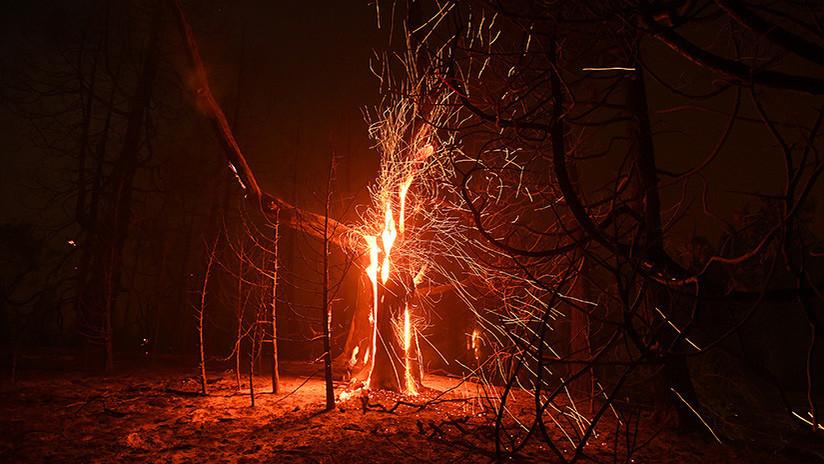 Graban el árbol que arde solo por dentro (VIDEO)