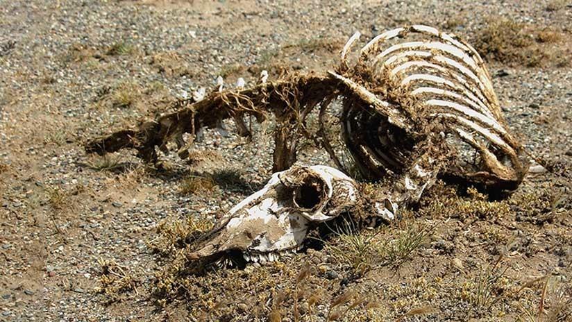 VIDEO: Encuentran en China un esqueleto de un 'dragón' de 18 metros