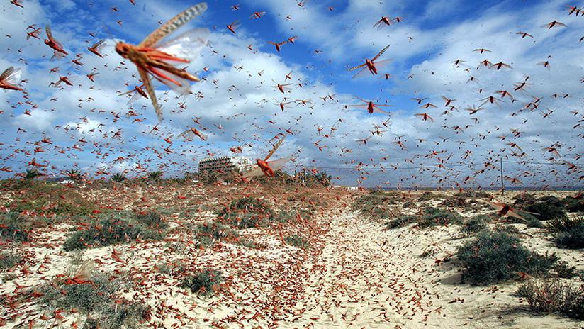 """Científicos advierten de que estamos en camino hacia un """"Armagedón ecológico"""""""