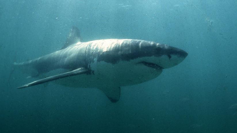 """""""Era como en las películas"""": Una joven se salva de ser devorada por un gran tiburón blanco"""