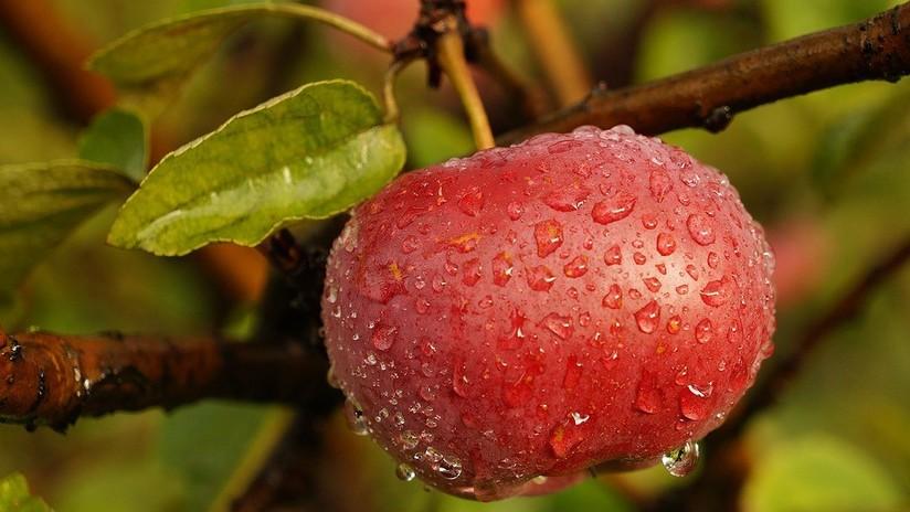 Así debemos lavar las manzanas para comérnoslas sin peligro (y el agua no ayuda aquí)