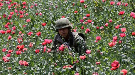Un soldado entre amapolas durante una operación militar, Coyuca de Catalán, Guerrero, México.