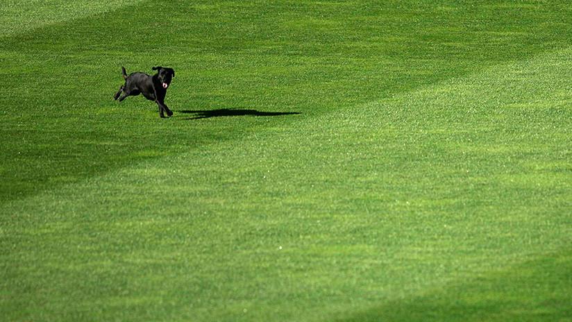 'El jugador del partido': Un perro policía se mete en el campo de juego y se roba toda la atención