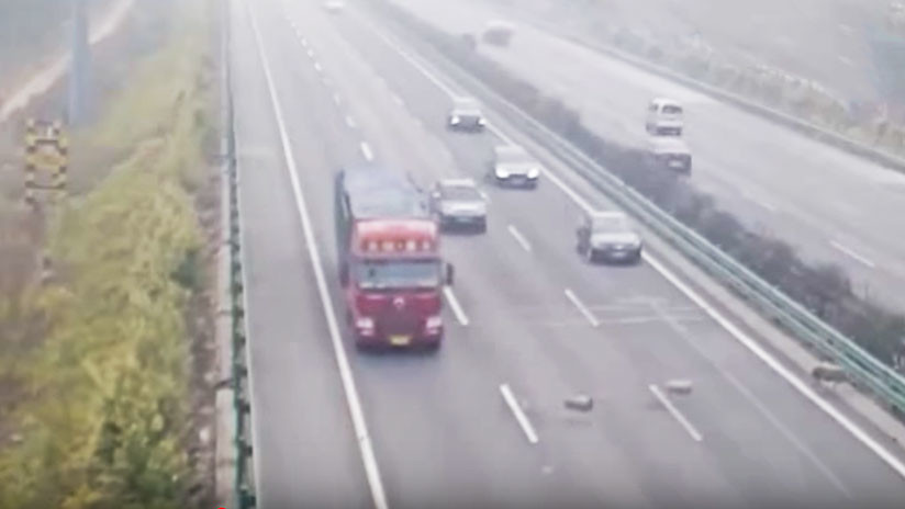Tres ovejas provocan un accidente de tráfico mortal en China (videos)
