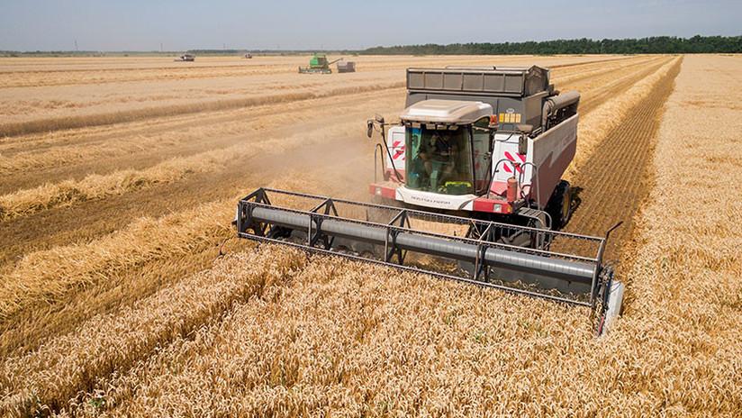 De las armas a la agricultura: Rusia se convierte en una superpotencia cerealística