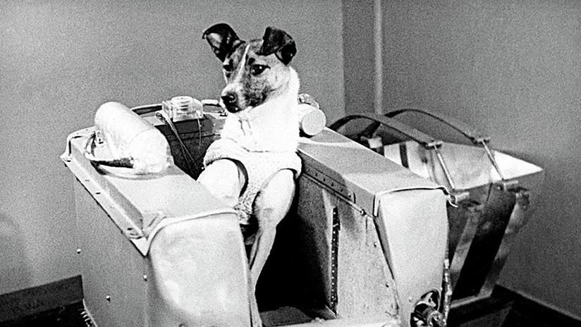 Laika, a 60 años del sacrificio de la perra que fue pionera de la carrera espacial