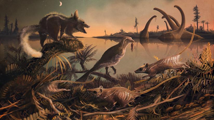 Descubren restos del mamífero prehistórico que podría ser el ancestro directo más antiguo del hombre