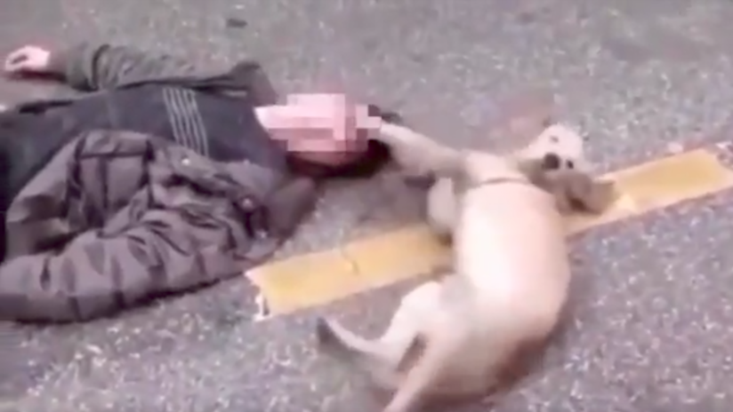 VIDEO: Conmovedor momento en el que un perro trata de despertar a su dueño desmayado en plena calle