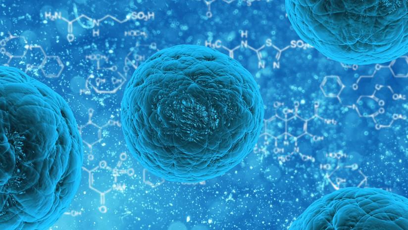 Descubren método para rejuvenecer células humanas