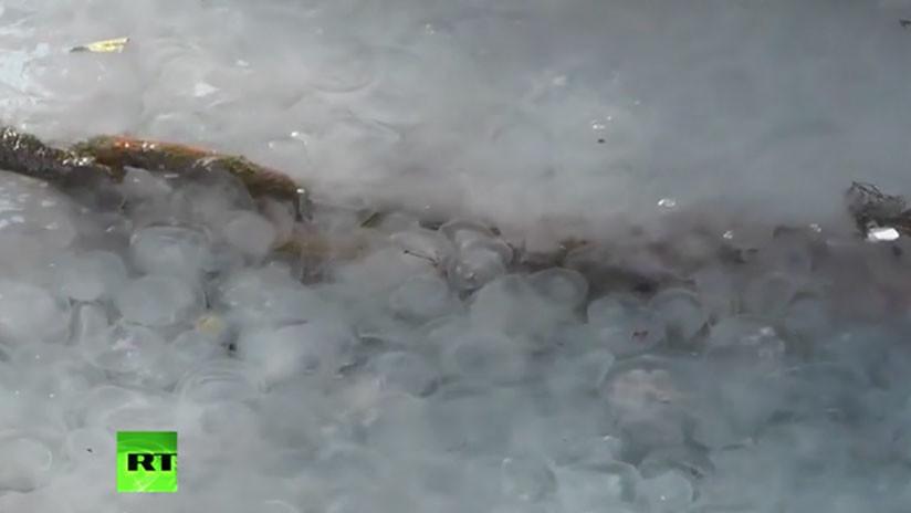 Video: Las medusas convierten en una masa viscosa las aguas de Crimea