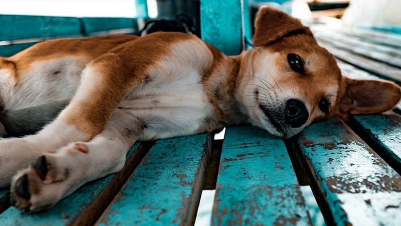 Colombia: Perrita abandonada en aeropuerto muere de tristeza en espera de sus dueños (FOTOS)