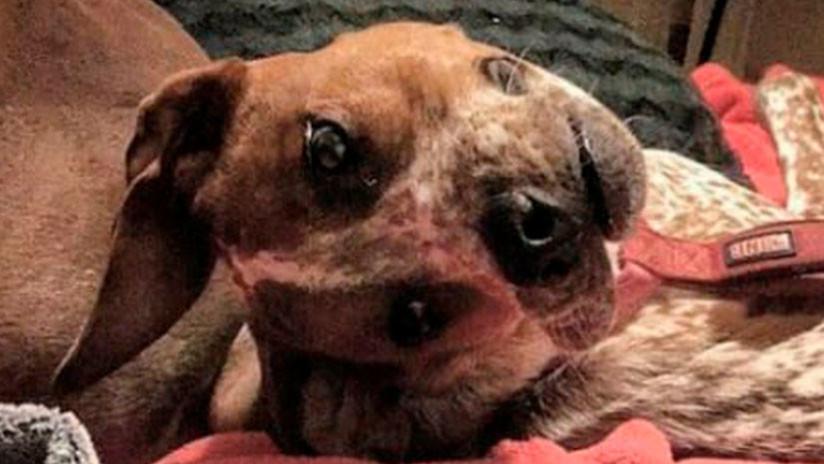FOTO: Una ilusión óptica con un perro 'deforme' conquista las redes