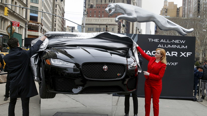 Hunde su Jaguar en un río para percibir el seguro y la historia tiene un final trágico