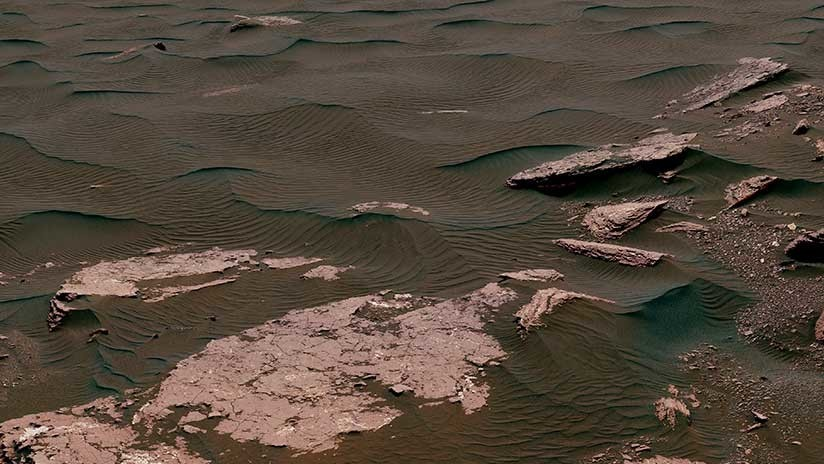 Hallan un animal adaptado a la vida en Marte