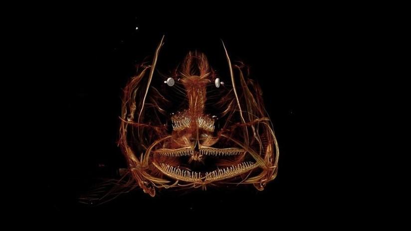 Científicos descubren un pez que vive a más de 8.000 metros de profundidad (VIDEO)