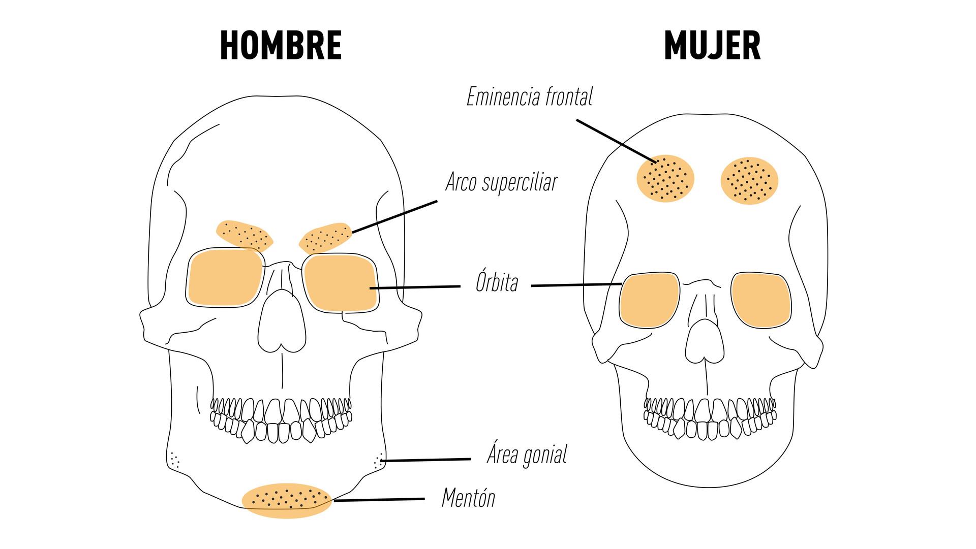 diferencias cráneo masculino y femenino