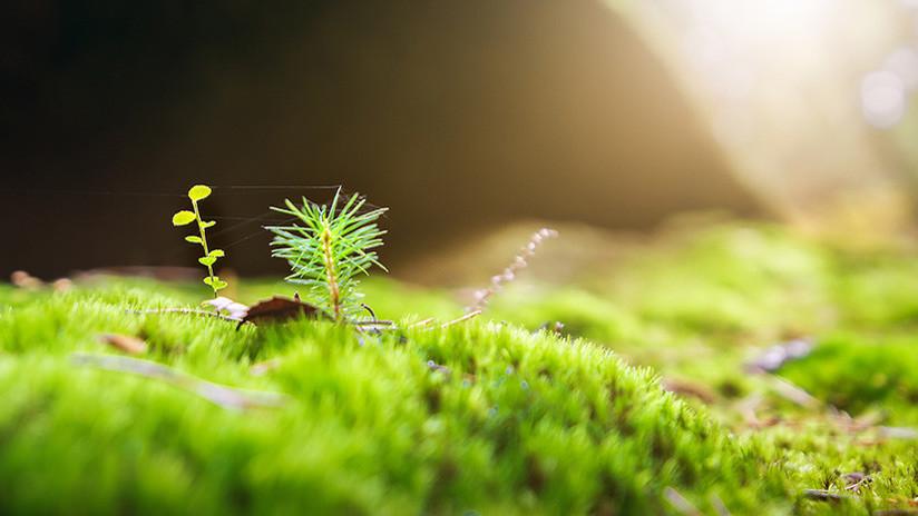 EE.UU. pone la primera semilla para crear 'plantas espía'