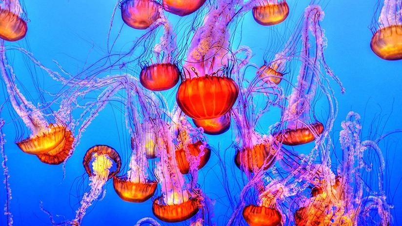 China se arma con una 'trituradora de medusas' para proteger a sus portaviones