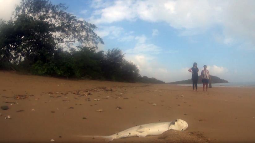 Al menos una docena de tiburones aparecen muertos misteriosamente en una playa de Australia (VIDEOS)