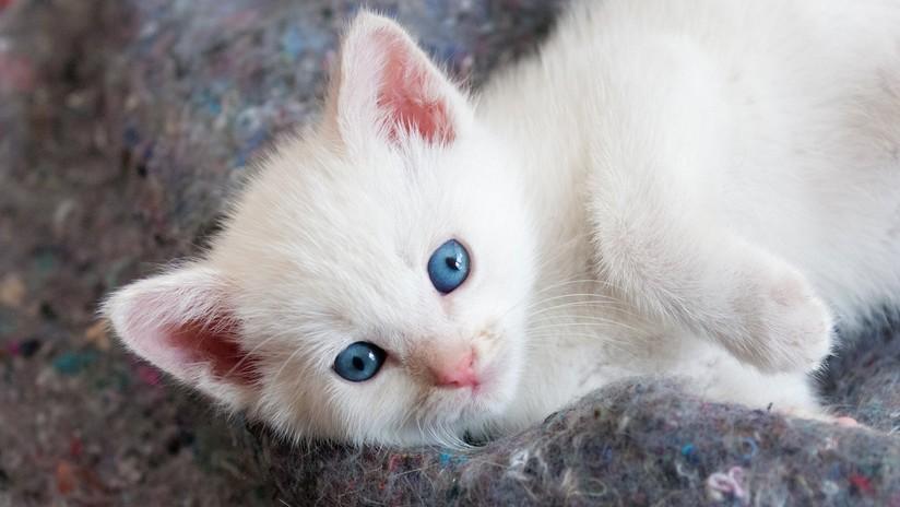 Un adolescente se gana el odio de la Red al lanzar a un gatito por los aires
