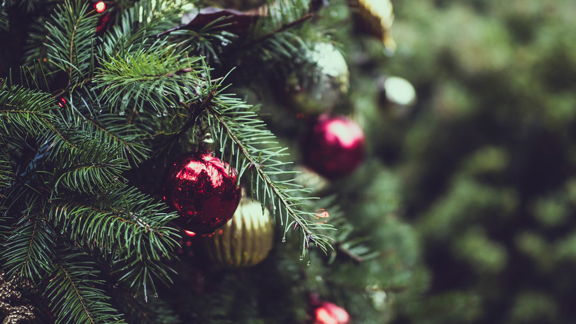 Árboles de Navidad con regalo: ¿Por qué México devuelve a EE.UU. más de 13.000 abetos?