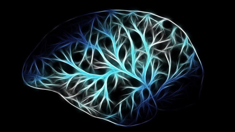 Explican cómo envejece nuestro cerebro (y por qué perdemos la memoria)