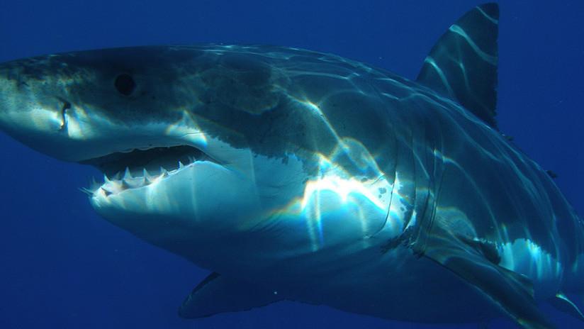VIDEO: Un tiburón blanco casi le arranca la cabeza a un buceador