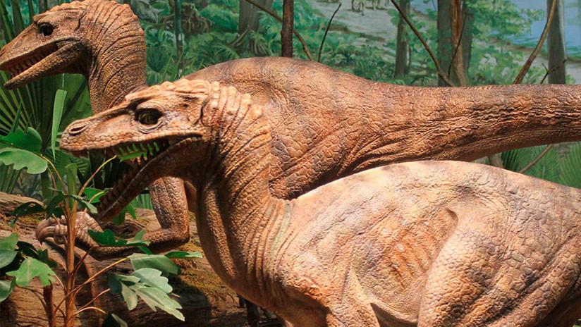 FOTO: Una extraña criatura similar a un dinosaurio deja perplejos a los científicos