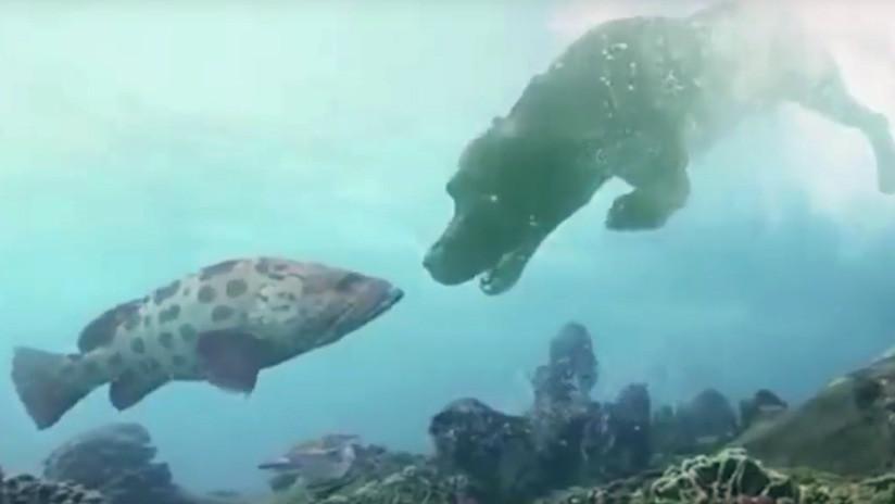 Rusia desarrolla una tecnología única para respirar en el agua (VIDEO)